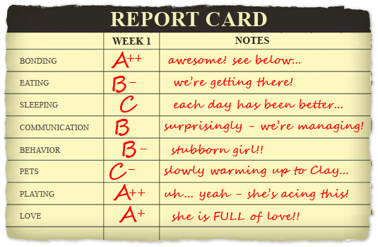 how to make a fake report card report card template instathredsco make your own electronic. Black Bedroom Furniture Sets. Home Design Ideas
